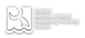 Global Marine Animal Stranding Training